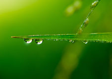 Water drop on leaves Stock Photography