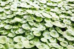 Water drop on leaves. Stock Image