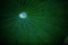 Water drop on lotus leaf Stock Photo