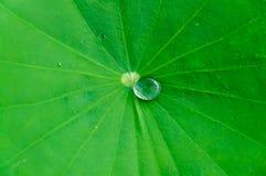 Water drop on lotus leaf Royalty Free Stock Photos