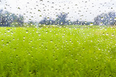 Water drop. Natural water drops on window glass with nature background Stock Photos