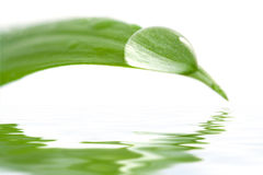 Water Drop On A Leaf Reflecting In Water Royalty Free Stock Photography
