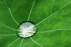 Free Water Drop On Leaf Stock Photo - 1312990