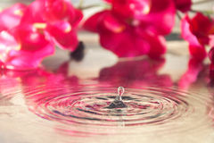 Water drop and orchid Stock Photography