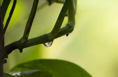 Free Water Drop Plant Stem Displaying Refraction Phenomenon Royalty Free Stock Photos - 156306828