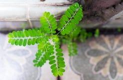 Water drop rain on green leaf Stock Photos