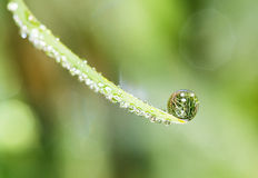 Water drop reflection. Reflection of a field in a drop of waterdew on the tip of a blade of grass Stock Images
