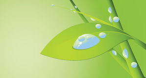 Water drop and seedling Stock Photo