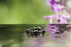 Water drop splash. On flower background Stock Images