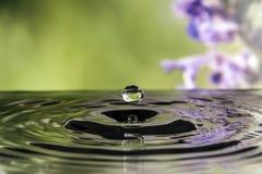Water drop splash. On flower background Royalty Free Stock Photo