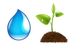 Water Drop And Sprout Stock Images