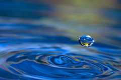 Water Drop Sunflower Stock Images