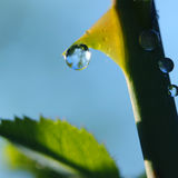Water drop on a thorn Royalty Free Stock Images
