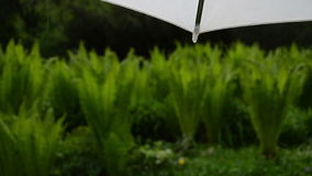 Water drop umbrella rain. Water drops fall from corner of white umbrella and blurred park plants in rainy day stock footage