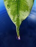 Water Droplet Royalty Free Stock Images