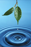 Water droplet. Falling from a green leaf is creating circles stock photos