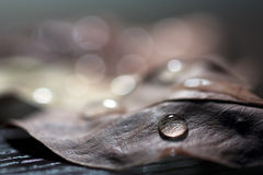Water droplet on autumn leaf Royalty Free Stock Photo