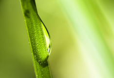 Water droplet extremely close up on grass Stock Image