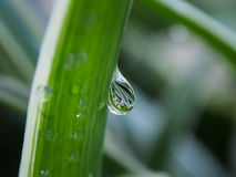 Water droplet falling off. Water droplet hanging from a leaf about to fall off Stock Images