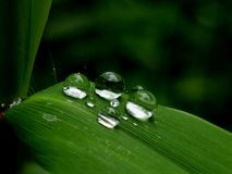Water Droplet Family Stock Photography