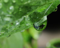 Water droplet on green leaf Stock Images