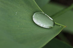 Water droplet on a green leaf edge. Macro photography Royalty Free Stock Photo