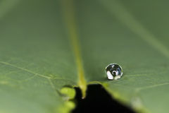 Water droplet Stock Photography