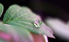Water droplet on green leaf Stock Photos