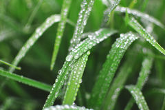 Water Droplet on Green Long Narrow Leaf Plant Stock Photo