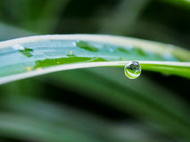Water droplet hanging. From a leaf Royalty Free Stock Photo