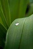 Water droplet on leaf Stock Photos