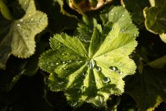 Water droplet on leaf after storm royalty free stock photo