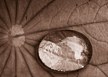 Water droplet in SEpia stock photos