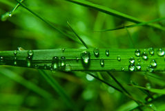 Water droplets Stock Images