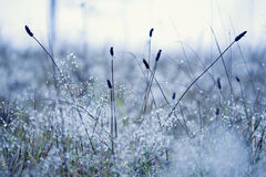 Water droplets. Blue tone, grass on a frosty morning Stock Images
