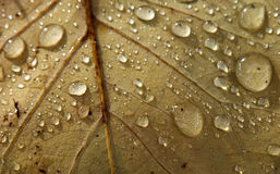 Water droplets on autumn leaf Stock Image