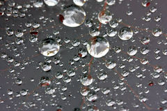 Water droplets close up on a leaf Royalty Free Stock Images