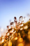 Water droplets frozen on the grass. Glistening water droplets frozen on the grass royalty free stock photography