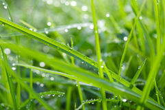 Water droplets on grass. Early in the morning Royalty Free Stock Image