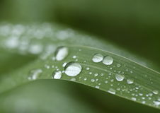 Water droplets on Grass blade - macro. Royalty Free Stock Photos