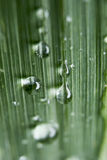 Water droplets on Grass Royalty Free Stock Photos