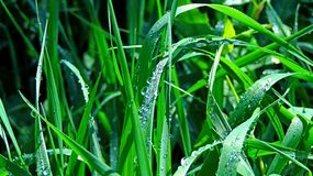 Water droplets on the grass Royalty Free Stock Images