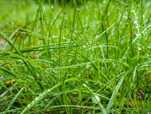 Water droplets on grass from rain at early morning. Up close stock image
