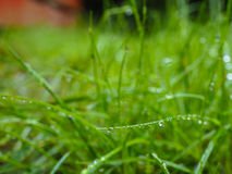 Water droplets on grass from rain at early morning. Up close royalty free stock photography