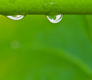 Water droplets. On green background stock photography