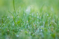 Water droplets on green grass Stock Photos