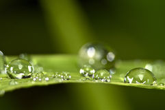 Water droplets on green grass.  Royalty Free Stock Photography