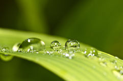 Water droplets on green grass stock image