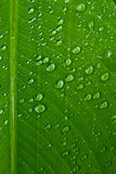 Water droplets on green leaf Stock Photos
