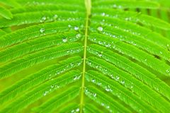 Water droplets on green leaf Stock Photo